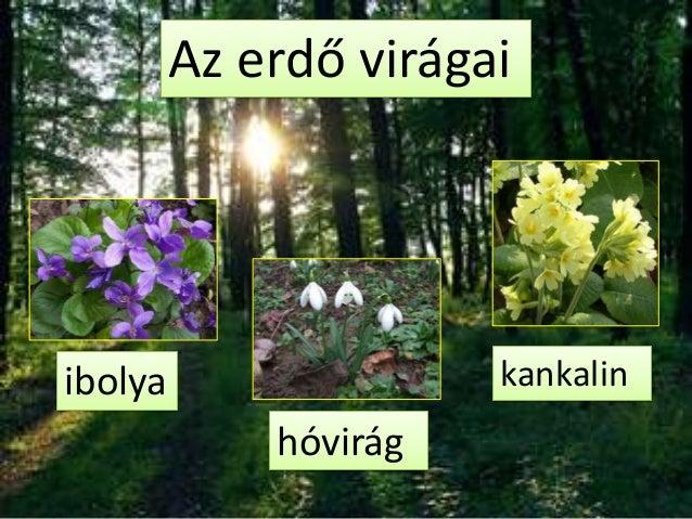 Az erdő virágaiibolya                 kankalin             hóvirág