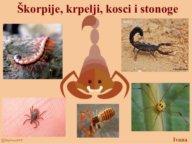 Ivana Škorpije, krpelji, kosci i stonoge