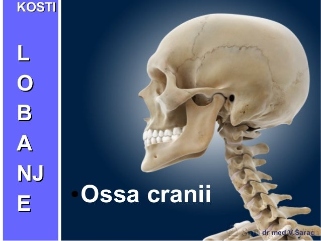 KKOOSSTTII  LL  OO  BB  AA  NNJJ  EE ●Ossa cranii  dr med.V.Šarac