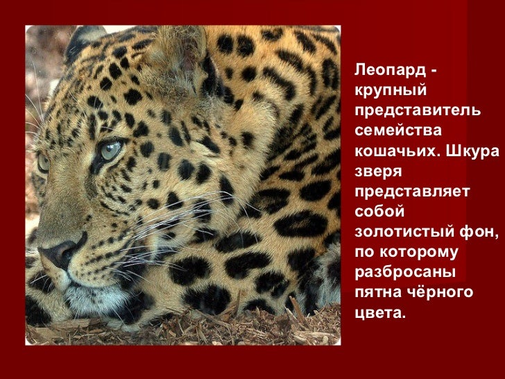Krasnaya kniga Slide 2