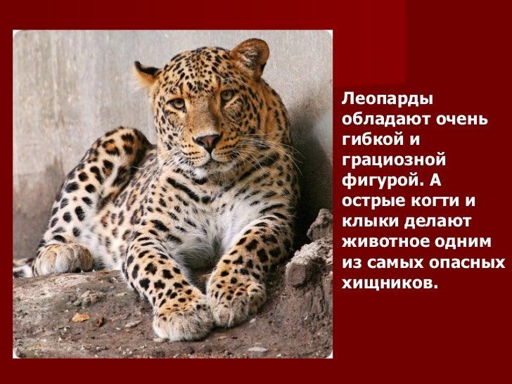 Krasnaya kniga Slide 3