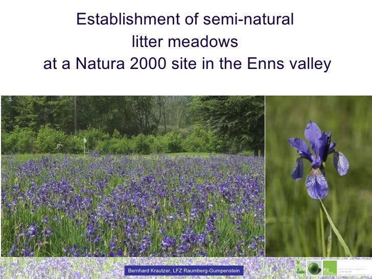 Establishment of semi-natural  litter meadows  at a Natura 2000 site in the Enns valley