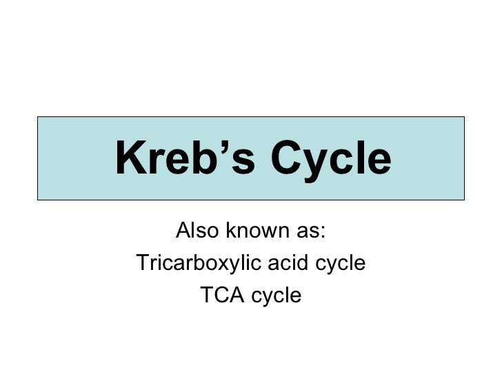 Also known as: Tricarboxylic acid cycle TCA cycle Kreb's Cycle