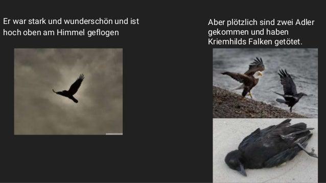 Er war stark und wunderschön und ist hoch oben am Himmel geflogen Aber plötzlich sind zwei Adler gekommen und haben Kriemh...