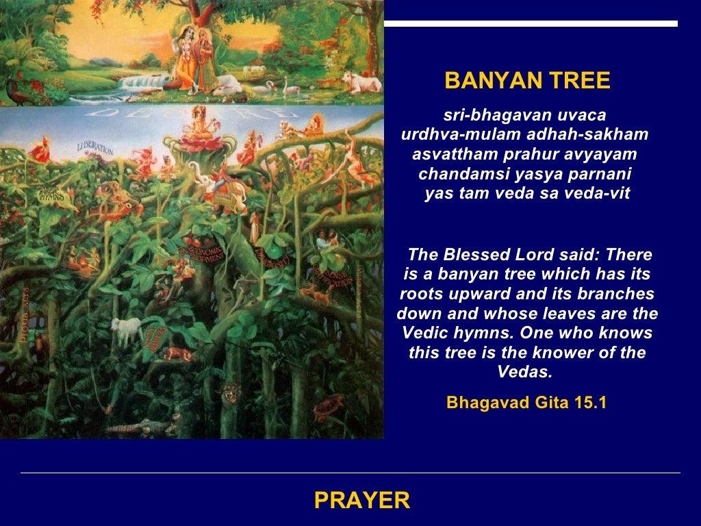 PRAYER BANYAN TREE sri-bhagavan uvaca   urdhva-mulam adhah-sakham   asvattham prahur avyayam   chandamsi yasya parnani   y...