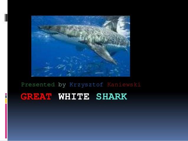 Presented by Krzysztof KaniewskiGREAT WHITE SHARK