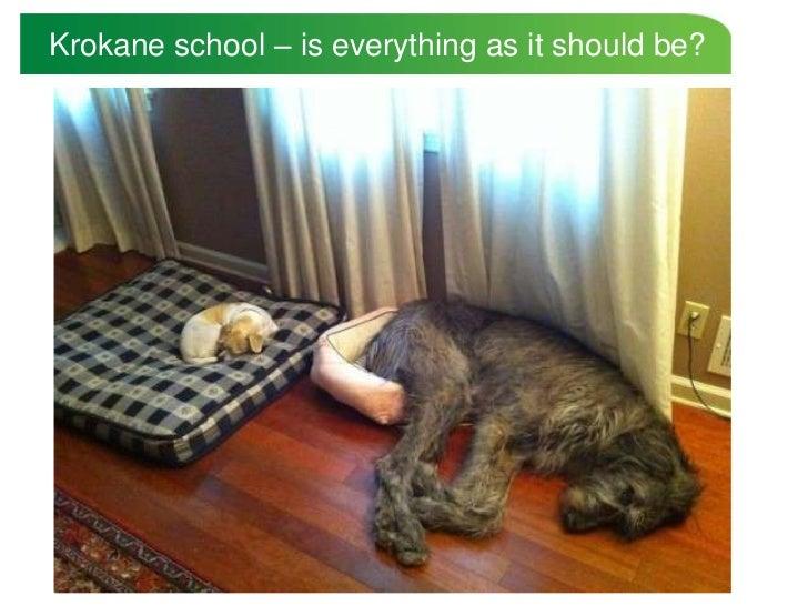 Krokane school – is everything as it should be?