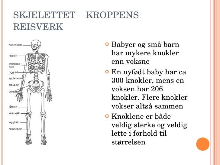 antall bein i kroppen