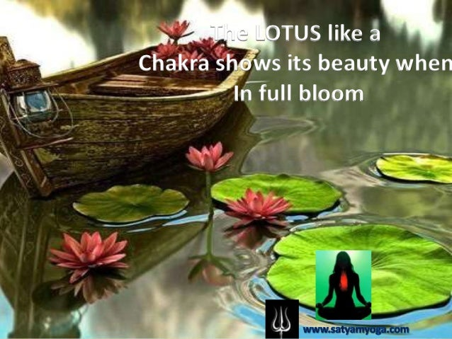 The LOTUS like aChakra shows its beauty when         In full bloom