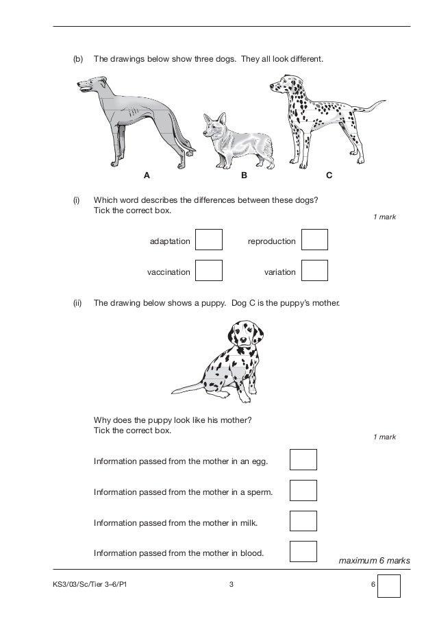 Ks3 science 2003 t3 6 paper 1
