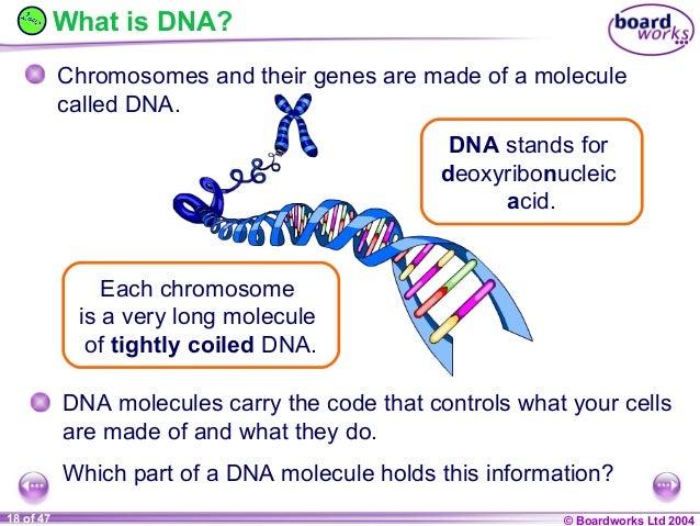 Ks4 chromosomes, genes and dna