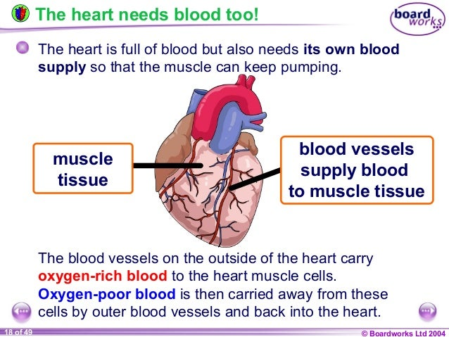 ks4 blood vessels Cells, organs and systems (ks4)  a set of 5 tasks helping students explore blood groups and blood  blood vessels.