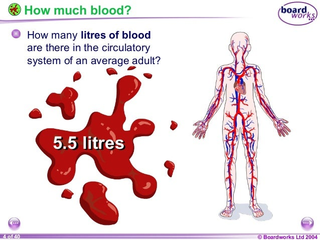 an overview of an experiment about the blood flow in a human body An introduction to the human body 1  201 structure and function of blood vessels  mechanisms reduce or increase blood flow in response to changing body.