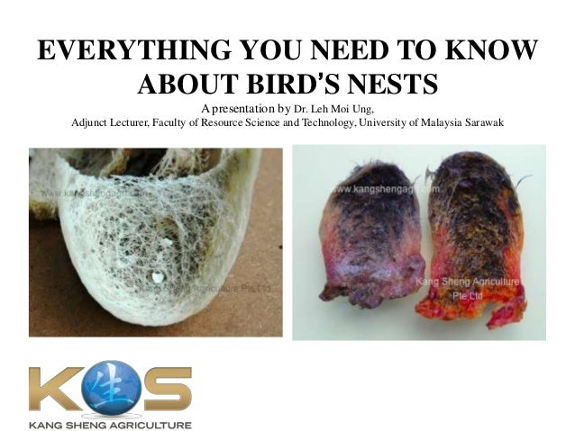 EVERYTHING YOU NEED TO KNOW ABOUT BIRD'S NESTS A presentation by Dr. Leh Moi Ung, Adjunct Lecturer, Faculty of Resource Sc...
