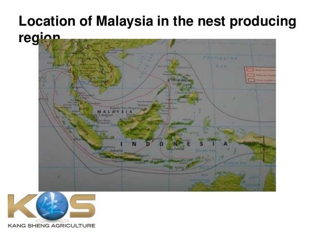 Kang Sheng Agri PPT about Bird's Nest Slide 3