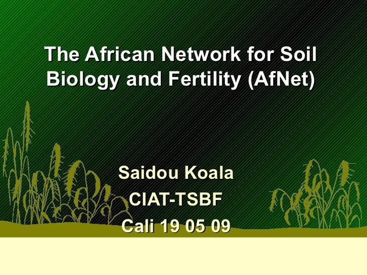 The African Network for Soil Biology and Fertility (AfNet) Saidou Koala CIAT-TSBF Cali 19 05 09