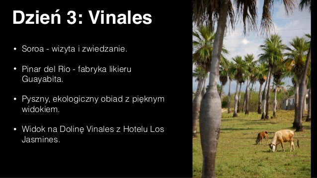 Dzień 4: Cayo Levisa • Plażowanie na jednej z piękniejszych plaż Kuby, na którą przeprawimy się wodnym taxi. • Obiad w res...