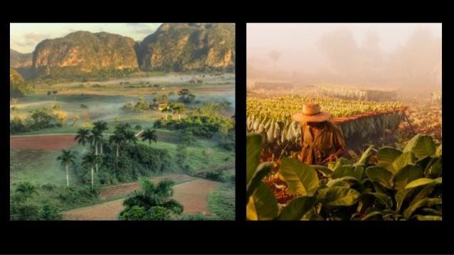 Dzień 5: Vinales • Konne zwiedzanie Doliny Vinales. W programie plantacja tytoniu, plantacja kawy i degustacja cygar. • Wi...