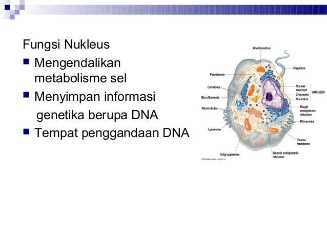 Kuliah 3 struktur dan fungsi sel