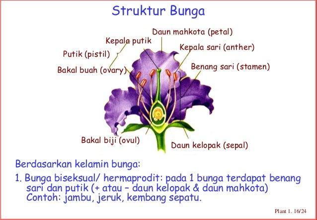 Gambar Bunga Kembang Sepatu Dan Bagian Bagiannya Gambar Bunga