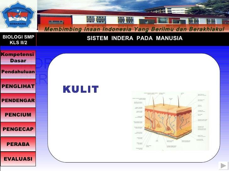 INDRA PERASA KULIT Membimbing Insan  Indonesia  Yang Berilmu dan Berakhlakul Karimah BIOLOGI SMP KLS II/2 SISTEM  INDERA  ...