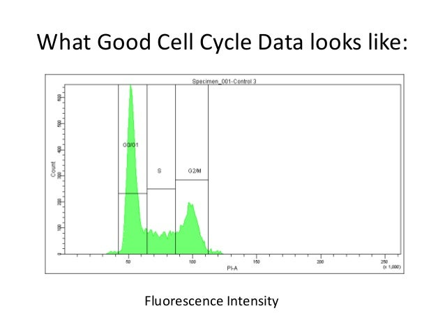 DNA cell cycle by flow cytometry