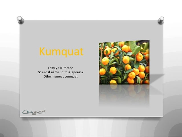 Kumquat       Family : RutaceaeScientist name : Citrus japonica    Other names : cumquat