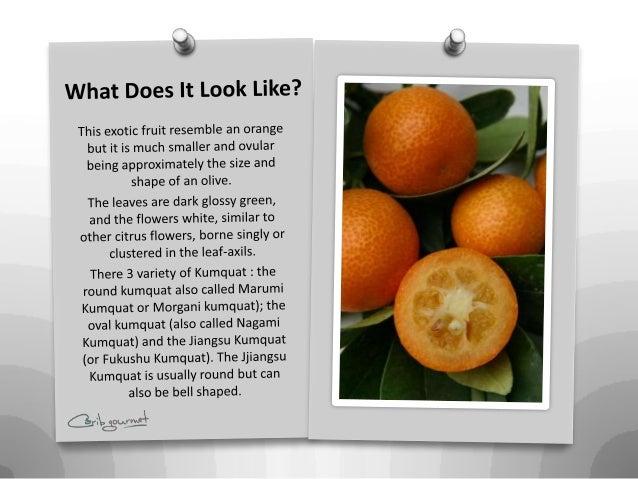 what is a kumquat urban dictionary