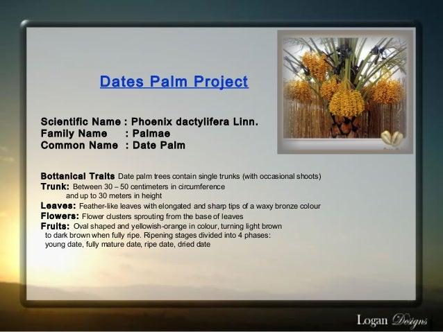 Dates Palm Project Scientific Name : Phoenix dactylifera Linn. Family Name: Palmae Common Name : Date Palm Bottanica...