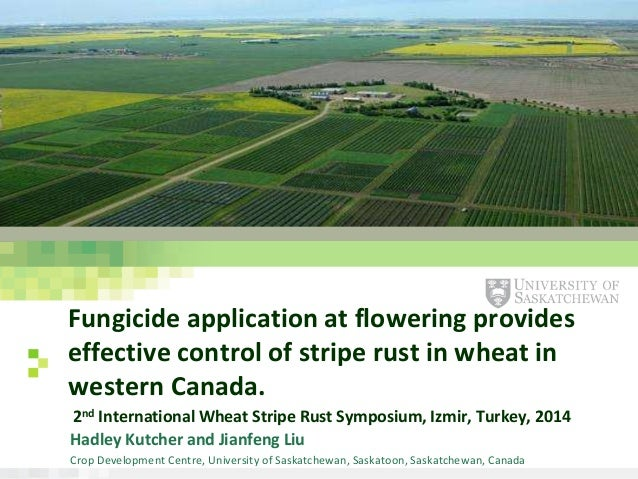 www.usask.ca Fungicide application at flowering provides effective control of stripe rust in wheat in western Canada. 2nd ...
