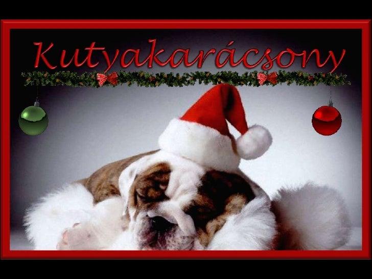 Kutyakarácsony<br />