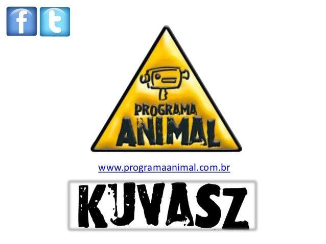 www.programaanimal.com.br