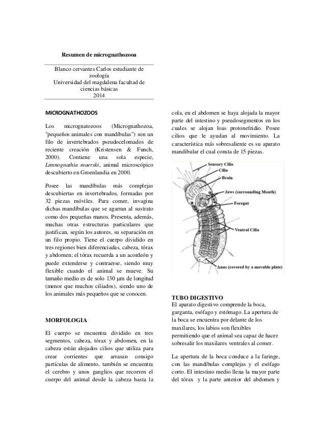 Resumen de micrognathozooa Blanco cervantes Carlos estudiante de zoología Universidad del magdalena facultad de ciencias b...