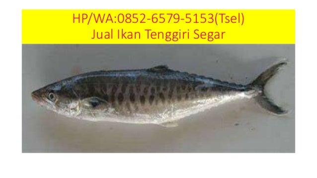 Aksesoris 50+ Spanduk Jual Ikan Segar