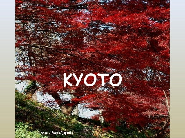 KYOTOArce / Maple/japonés