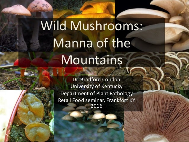 Wild Mushrooms: Manna of the Mountains Dr. Bradford Condon University of Kentucky Department of Plant Pathology Retail Foo...