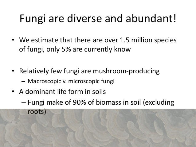 Roles of fungi • Recyclers – Decay dead plants – Recycling carbon – Easy to cultivate