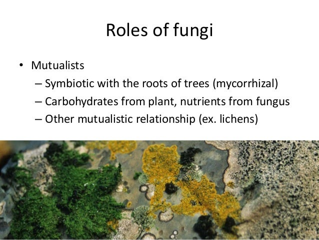 Mutualists cooperate with plants