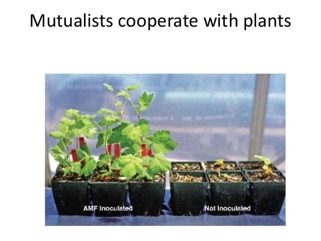 Mutualism: Mycorrhizae