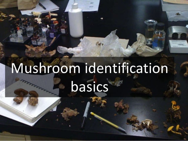 Requirements for serving wild mushrooms (Conference for Food Protection) 1. The Latin binomial name, the author of the nam...
