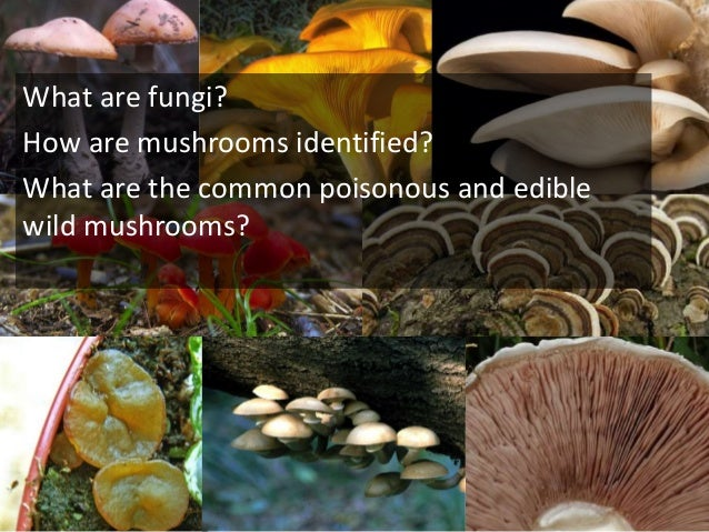 What are fungi? How are mushrooms identified? What are the common poisonous and edible wild mushrooms?