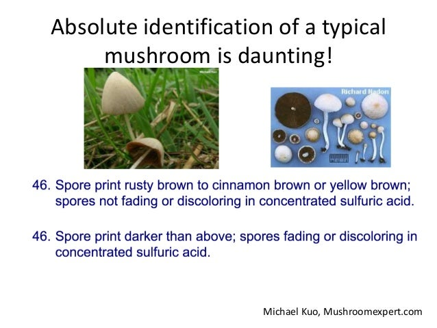 Why identify fresh mushrooms? 2. [a statement] that the mushroom was identified while in the fresh state