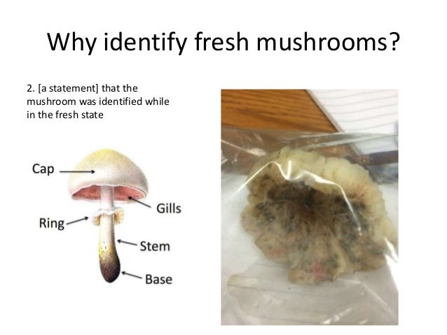 Identifying any given wild mushroom is challenging for novices Identifying the common, safe wild mushrooms can be easy wit...