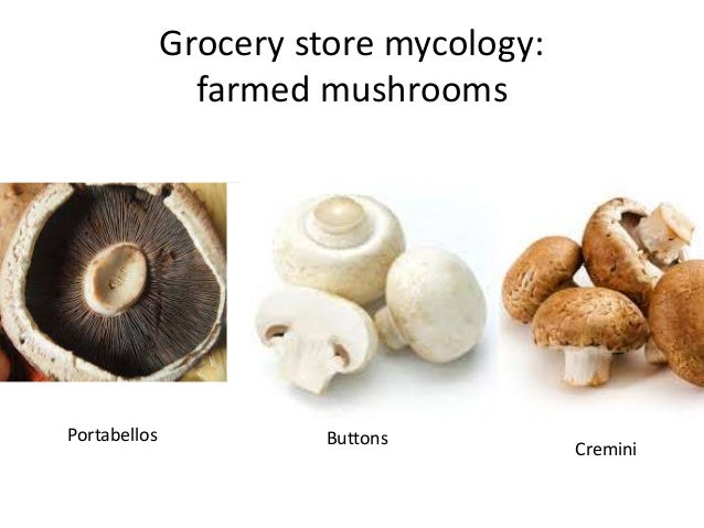 Grocery store mycology: farmed mushrooms Portabellos Buttons Cremini