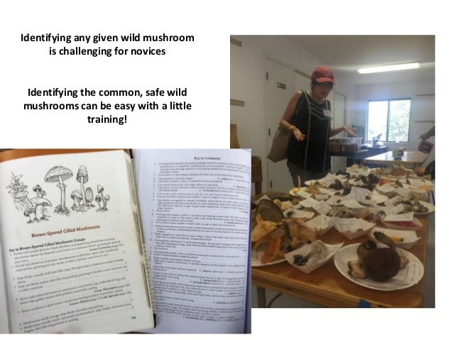 What are the common poisonous and edible wild mushrooms?
