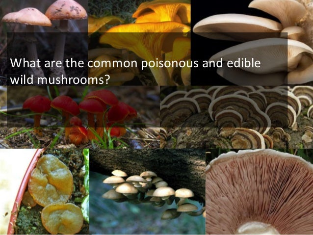Wild mushroom consumption • Be very wary of poisonous mushrooms