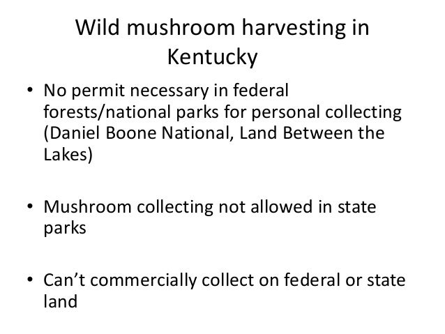 Mushroom identification is hard A select group of choice edibles are comparatively easy to ID Most mushroom illnesses occu...