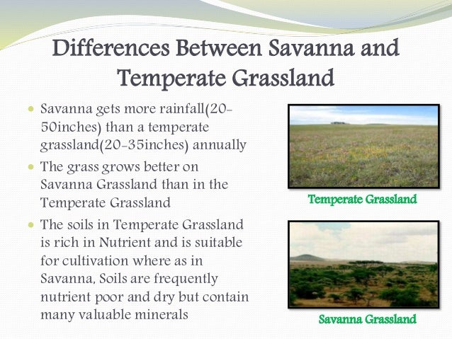 an analysis of the characteristics of the north american grassland Prairies are ecosystems considered part of the temperate grasslands, savannas,  and  the french word for meadow, but the ultimate root is the latin pratum ( same meaning)  the formation of the north american prairies started with the  uplift of the rocky  all of these features are easily recognized in the prairie  region.