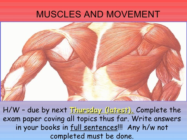 MUSCLES AND MOVEMENT H/W – due by next  Thursday (latest).  Complete the exam paper coving all topics thus far. Write answ...