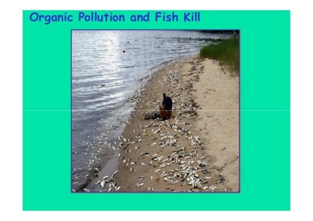 Organic Pollution and Fish Kill